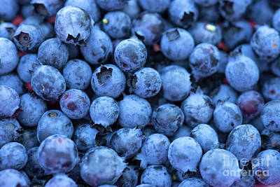 Photograph - Fresh Blueberries by Alana Ranney