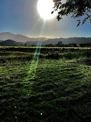 Fresh Cut Grass And Vineyard Art Print