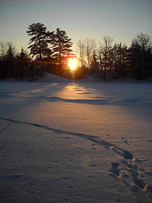 Photograph - Fresh Deer Tracks At Sunrise by Kent Lorentzen