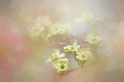 Photograph - Fresh Dogwood Blooms by Jai Johnson