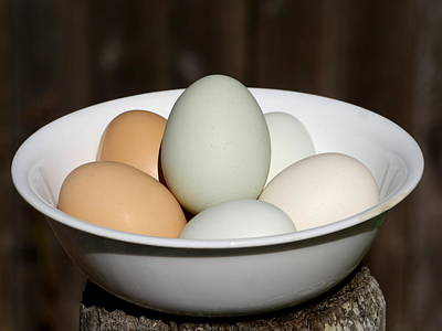 Photograph - Fresh Eggs by Richard Reeve