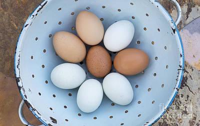 Colander Photograph - Fresh Eggs by Tim Gainey