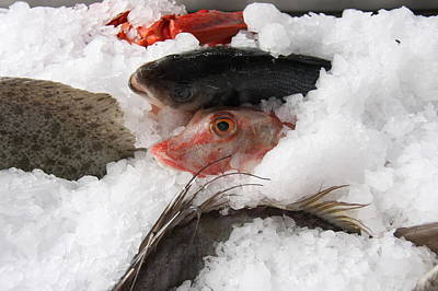 Cours Saleya Photograph - Fresh Fish by Jen Chappell