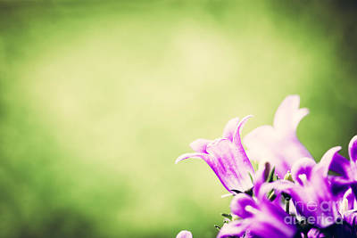 Nobody Photograph - Fresh Flower Close-up On Grass Natural Background by Michal Bednarek