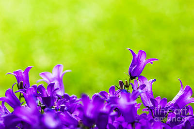 Purple Photograph - Fresh Flowers Close-up On Grass Natural Background by Michal Bednarek