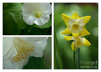 Photograph - Fresh Flowers Triptych by Patricia Strand