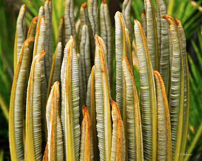 Photograph - Fresh Fronds by Christopher Holmes
