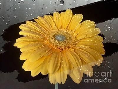 Digital Art - Fresh Golden Daisy by Jeannie Rhode