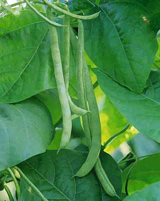 Green Beans Painting - Fresh Green Beans Plant In Garden  by Lanjee Chee