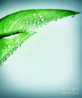 Photograph - Fresh Green Leaf Border by Anna Om