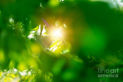 Photograph - Fresh Green Leaves Background by Anna Om
