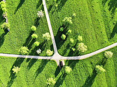 Photograph - Fresh Green Meadow With Trees In Spring Aerial View by Matthias Hauser