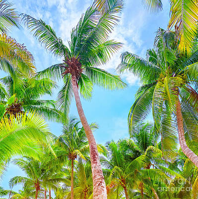 Photograph - Fresh Green Palm Trees Background by Anna Om