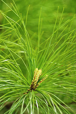 Photograph - Fresh Green Pine by Christina Rollo
