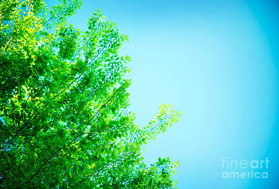 Photograph - Fresh Green Tree Border by Anna Om