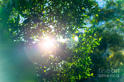 Photograph - Fresh Green Tree Foliage by Anna Om