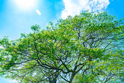 Photograph - Fresh Green Tree Over Blue Sky Background by Anna Om