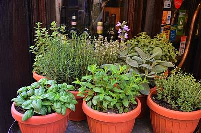 Photograph - Fresh Herbs by JAMART Photography