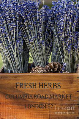 Cut Flowers Photograph - Fresh Herbs  by Tim Gainey