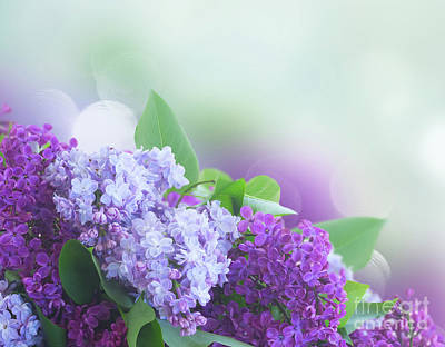 Photograph - Lilac Garden by Anastasy Yarmolovich