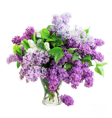 Photograph - Fresh Lilac Flowers In Vase by Anastasy Yarmolovich