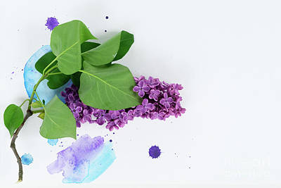 Photograph - Lilac Watercolor by Anastasy Yarmolovich