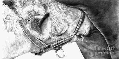 Equine Drawing Drawing - Fresh Milk by Sheona Hamilton-Grant