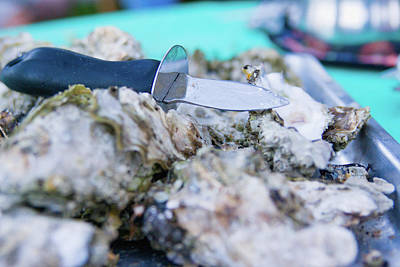 Photograph - Fresh Oysters by Erin Kohlenberg