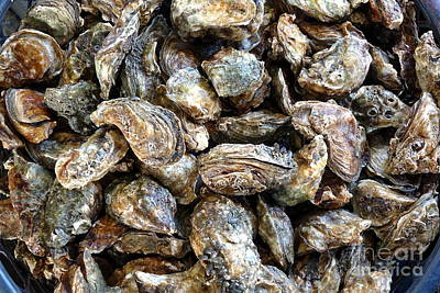 Photograph - Fresh Oysters For Sale by Yali Shi