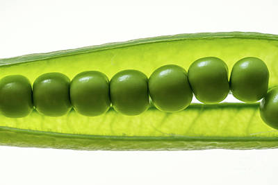 Photograph - Fresh Peas by Giovanni Malfitano