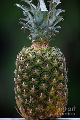 Photograph - Fresh Pineapple by Dale Powell