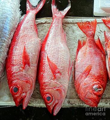 Photograph - Fresh Red Snappers by Yali Shi