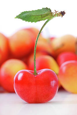 Fresh Ripe Cherries Isolated On White Print by Sandra Cunningham