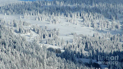 Photograph - Fresh Snow by Janice Westerberg