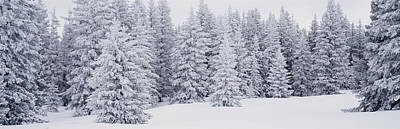 Fresh Snow On Pine Trees Taos County Nm Art Print by Panoramic Images