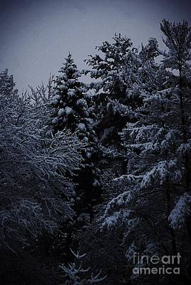 Frank J Casella Royalty-Free and Rights-Managed Images - Fresh Snow on the Pines by Frank J Casella