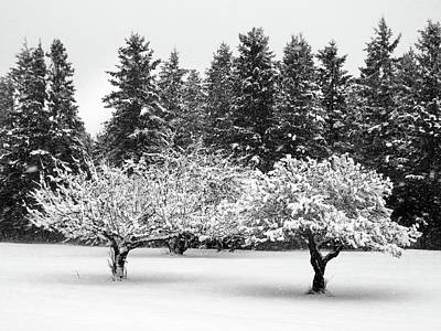 Photograph - Fresh Snow On The Trees by David T Wilkinson