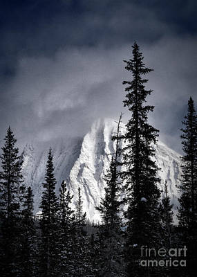 Photograph - Fresh Snowfall by Brad Allen Fine Art