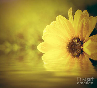 Close-up Photograph - Fresh Spring Flower In Water And Sun Light by Michal Bednarek