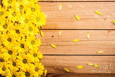 Many Photograph - Fresh Spring Flowers And Petals On Rustic Wood by Michal Bednarek