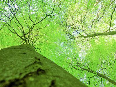 Photograph - Fresh Spring Green, Beech Foliage by Martin Stankewitz