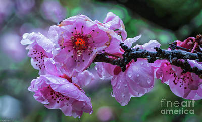 Photograph - Fresh Spring Rain by Mitch Shindelbower