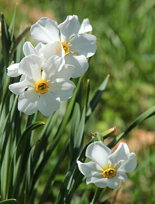 Photograph - Fresh Spring by Rosanne Jordan