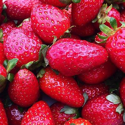Photograph - Fresh Strawberries - Just Loved The by Paul Dal Sasso