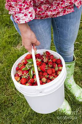 Holding Photograph - Fresh Strawberries by Elena Elisseeva