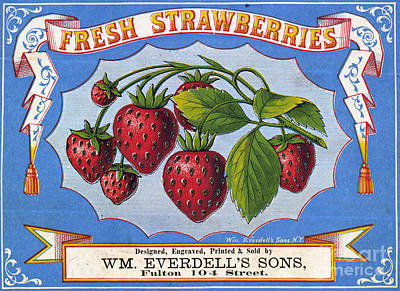 Drawing - Fresh Strawberries Fruit Label by Edward Fielding