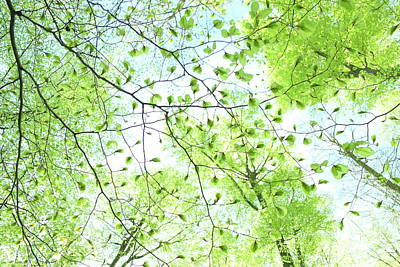 Photograph - Fresh, Young Beech Leaves, Spring Forest by Martin Stankewitz
