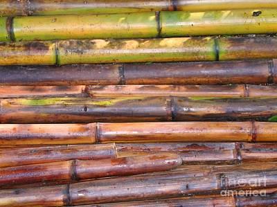 Freshly Cut Bamboo Poles Art Print by Yali Shi