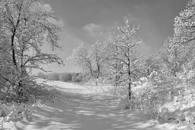 Butterfly Photograph - Freshly Fallen Snow by John Ohm