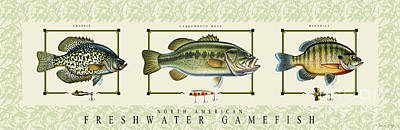 Painting - Freshwater Gamefish by Jon Q Wright